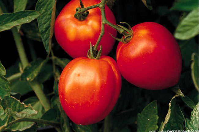 Nutritional Profile of Tomatoes