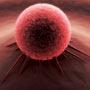 प्रोटीन थेरेपी से प्रोस्टेट कैंसर का इलाज