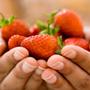 स्ट्राबेरी खाइए, स्वस्थ रहिए