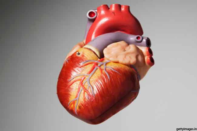 दिल के बारे में आश्चर्यजनक तथ्य