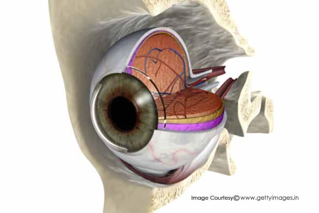 आंखों की मांसपेशियां