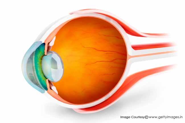आंखों का रेटिना