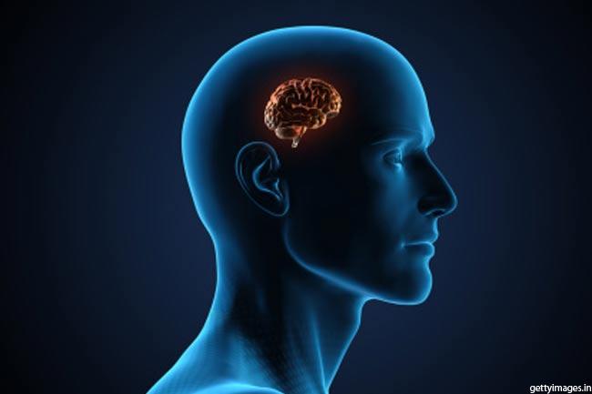 मस्तिष्क की कोशिकाएं