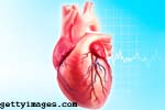Amazing Facts About Human Heart