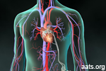Causes, Symptoms and Treatment of Mitral Valve Prolapse
