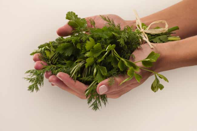 how to use dried coriander leaves