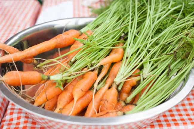 गाजर का प्रयोग
