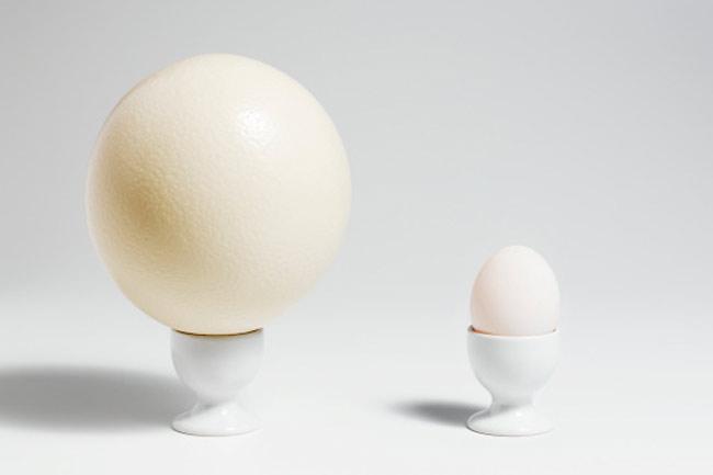 अंडे का आकार