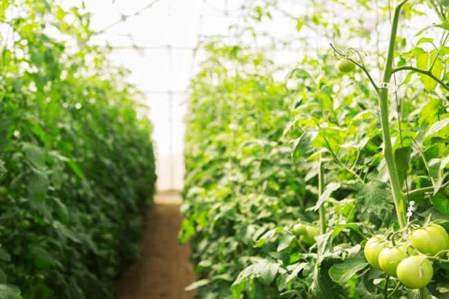 जैविक खाद्य पदार्थों का सेवन