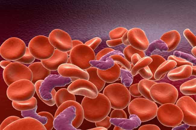 Combating Anaemia