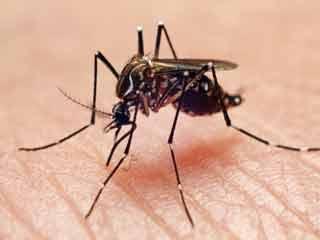 डेंगू बुखार में प्लेटलेट की घटती संख्या