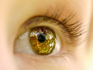 Stem cells in eye can restore vision, study