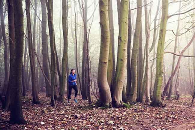 जंगल में दौड़ें