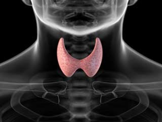 थॉयराइड की अधिकता से होता है दिल बीमार