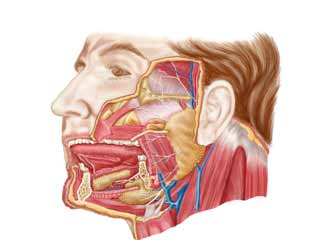 What is Sialadenitis?