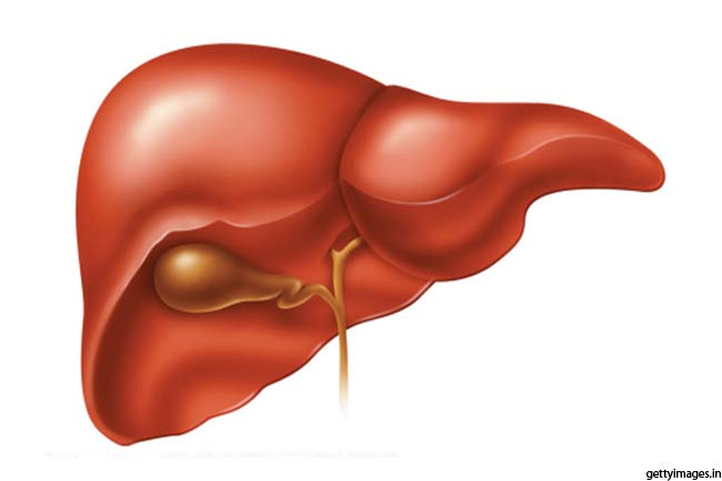 facts about human liver | sports and fitness, Human body