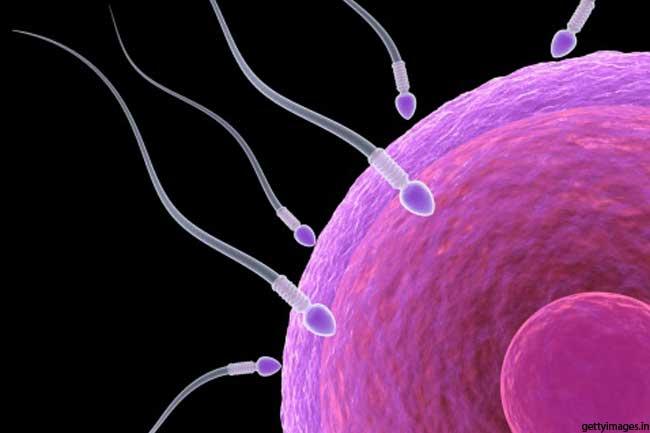 पुरुषों में करोड़ों शुक्राणु