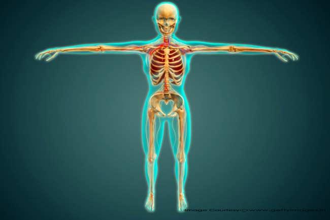 मानव शरीर अंगों से जुड़े रोचक तथ्य