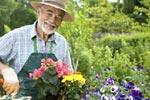 बागवानी से बनाएं सेहत
