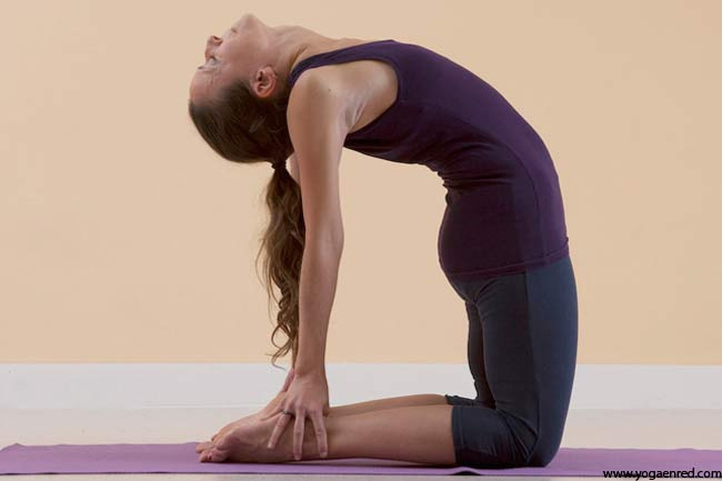 Ustra asana improves blood circulation to your crucial organs