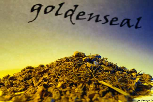गोल्डनसील (Goldenseal)