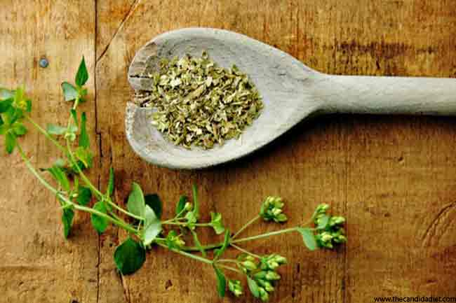 "Oregano- More than Just ""Pizza Herb"""