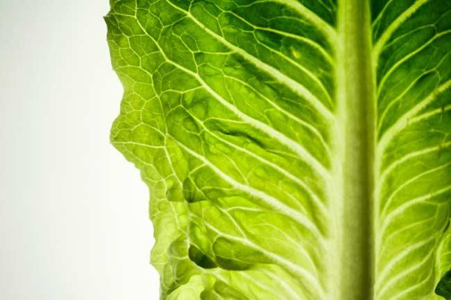 Makes your Lettuce Crispy
