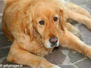 How to Take Care of Older Dogs