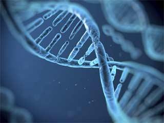 19 हजार जींस पैदा करते हैं मानव में प्रोटीन