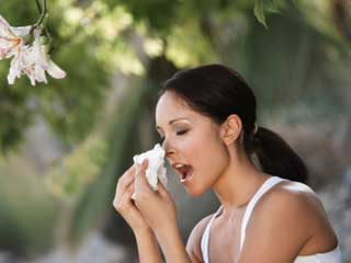 What is the treatment of Hay Fever Allergic Rhinitis?