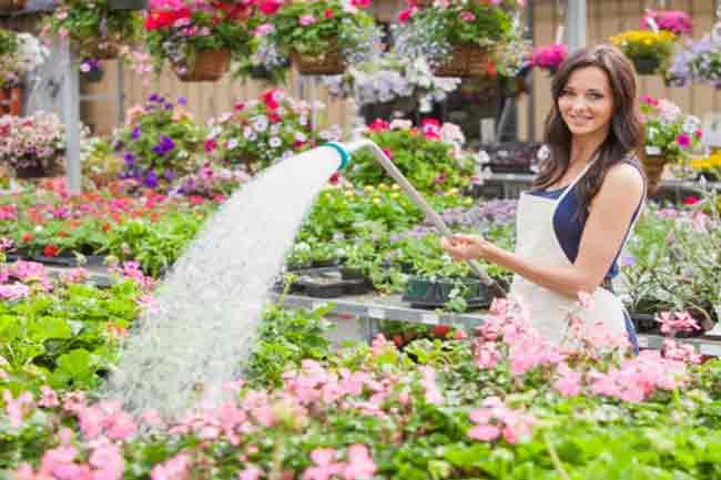पौधों को पानी देना