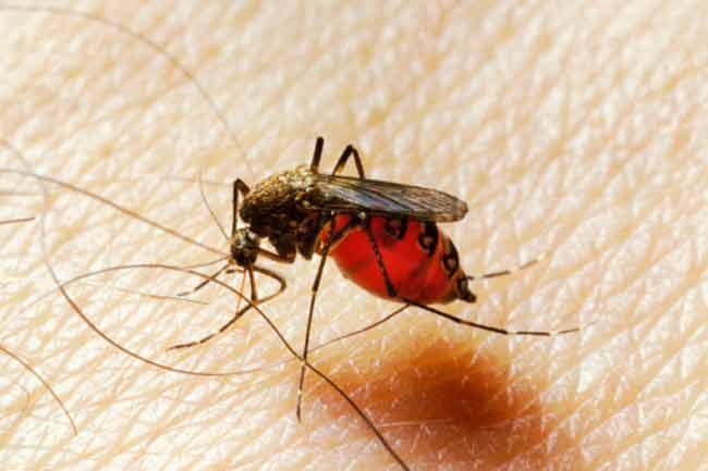 मच्छरों से बचाव