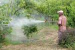 कीटणुनाशकों की वजह से फैल सकता है नोरोवायरस
