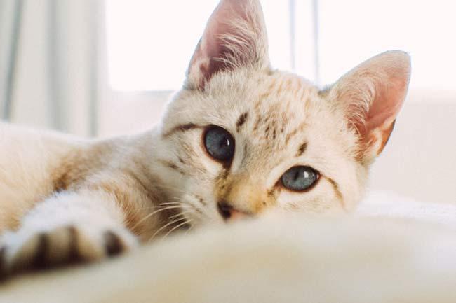 बिल्ली की खरोंच से फर्नीचर को बचाये