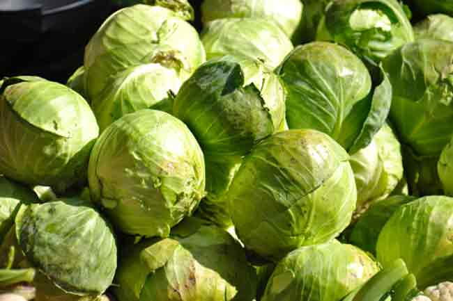 Cabbage for Glucosinolates