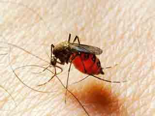 डेंगू और मच्छरों से होने वाली अन्य बीमारियों से कैसे बचें