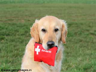 Pet First Aid Advice While Travelling
