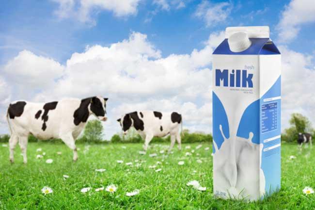 किसे पीना चाहिए फुल क्रीम दूध