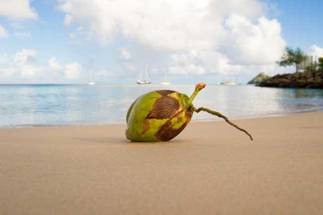 नारियल के नकारात्मक प्रभाव
