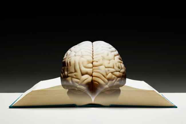 Brain Cells Can't Regenerate