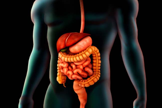 Mostly, the Digestion takes Place in the Small Intestine