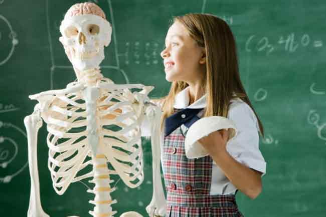 हड्डियों की संख्या में कमी