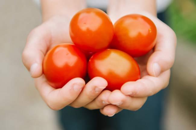 Oranges & Tomatoes