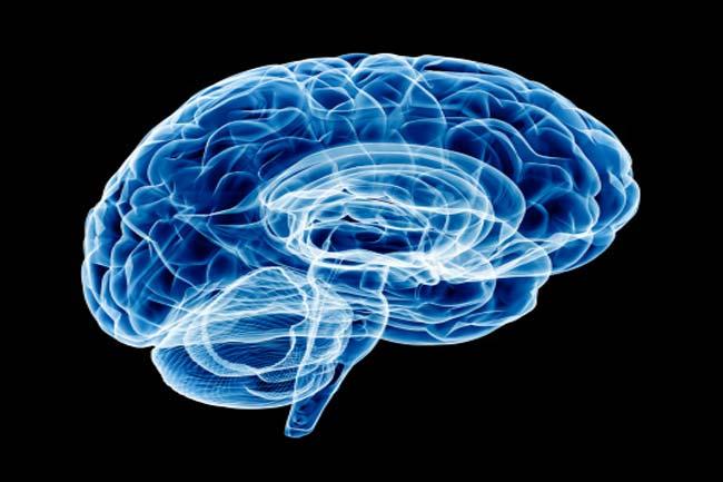 मस्तिष्क में रक्त प्रवाह