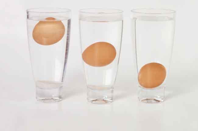 क्या यह अंडा ताजा है