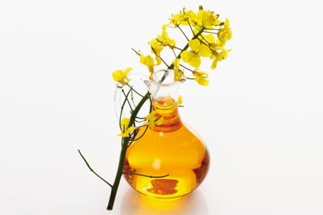 कैनोला तेल (Canola oil)