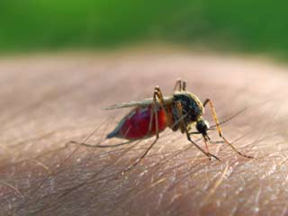 Difference between Dengue and Malaria Fever