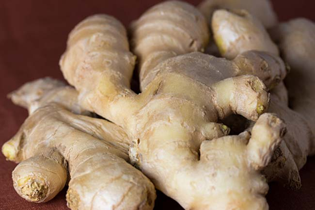 Ginger (Zingiber officinalae)