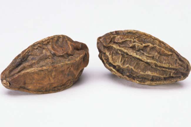 Hartaki (Terminalia chebula)
