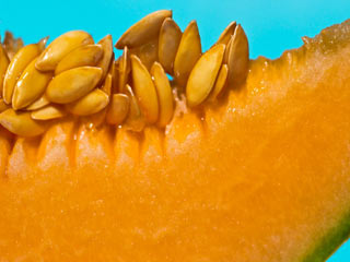 Muskmelon Seeds in Summer